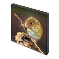 Harvest Mice Photo Block AJ_03_PB